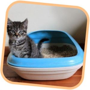 beco-tray-blu-lettiera-biodegradabile-per-gatto