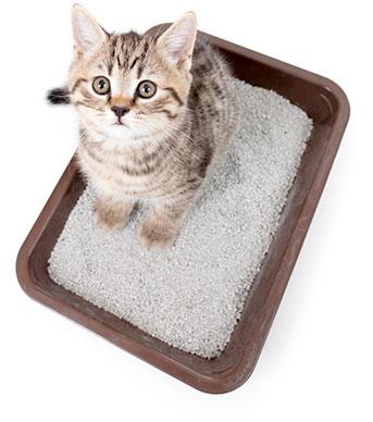 lettiera-per-gatto-quale-scegliere