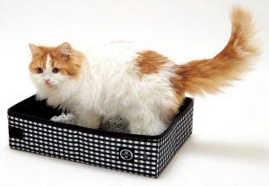 lettiera-per-viaggiare-con-il-gatto