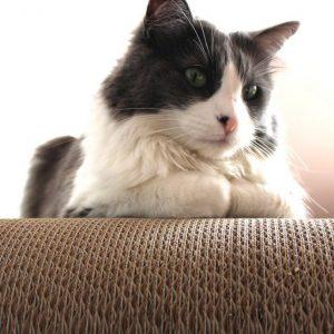 tiragraffi-cartone-salute-gatto-petvalley